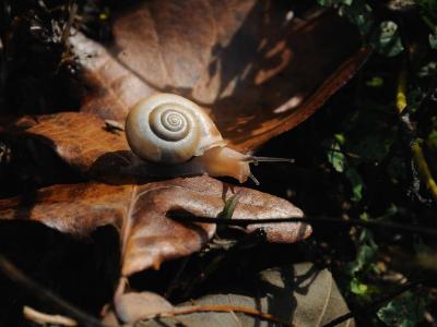 Snail on autumn leaf