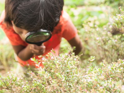 Child looking at plants TW