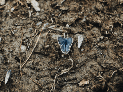 Butterfly and soil