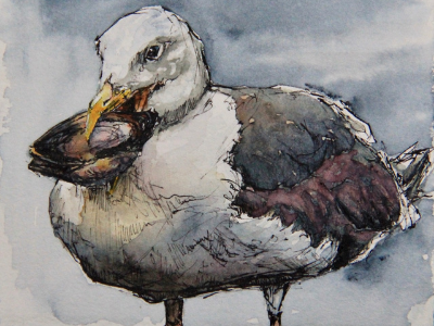 Painting of seagull holding clam by Leanne Cadden