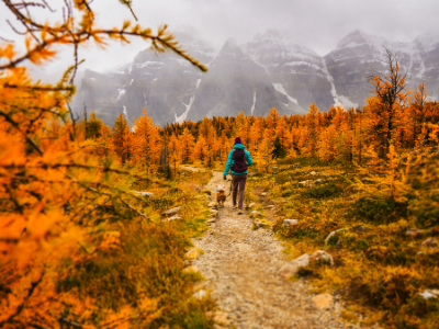 Person walking along autumn forest path