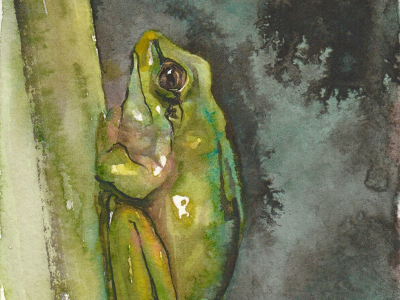 Tree frog watercolour wash illustration