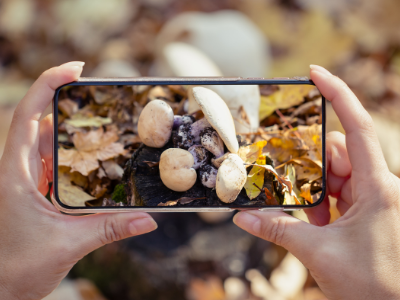 Taking picture of mushrooms in forest