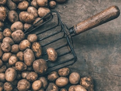 pile of potatoes with gardening fork