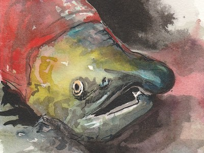 Ink and watercolour painting of a salmon